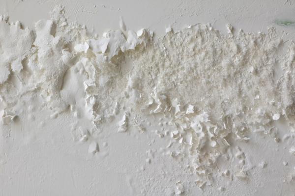 Infiltra o em parede veja os cuidados e dicas - Tipos de hongos en la pared ...